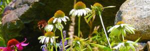 Blisscapes Landscape Design & Nursery
