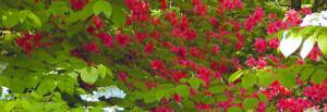 Blisscapes Landscape Design & Nursery Spring Gallery