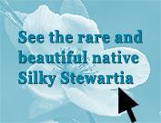 Stewartia malacodendron, Silky Stewartia